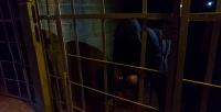 <b>Скидка до 50%.</b> Участие вквесте «Тюремный бунт» откомпании «Адреналин74»