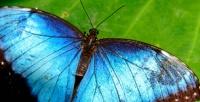 <b>Скидка до 50%.</b> Посещение выставки живых тропических бабочек иэкзотических животных отпарка «Живая планета»