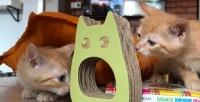 Экскурсия спосещением котокафе «Город кошек» (300руб. вместо 600руб.)