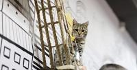 <b>Скидка до 50%.</b> Билет для взрослого или ребенка напосещение выставки кошек сэкскурсией иугощениями вкотокафе Loftkot