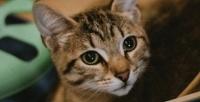Посещение котокафе «Город кошек» (300руб. вместо 600руб.)