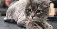 <b>Скидка до 61%.</b> Профессиональный груминг для кошек или полный комплекс услуг для декоративных пород собак всалоне для животных «Милорд»