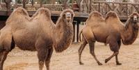 <b>Скидка до 50%.</b> Посещение сафари-парка сэкскурсионной программой отэкоотеля «Изумрудный лес»