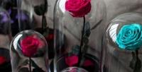 Роза вколбе сподставкой высотой 28см (2450руб. вместо 3500руб.)