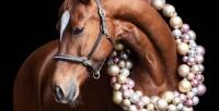<b>Скидка до 51%.</b> Прогулка верхом налошади или пони либо романтическая конная прогулка отконного клуба «Красный бор»