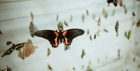 <b>Скидка до 55%.</b> Посещение парка тропических бабочек или фотоаттракциона 3D-картин откомпании «Монарх»