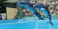<b>Скидка до 50%.</b> Билет напосещение дельфинария, океанариума, зоопарка, пингвинария или парка юрского периода вДжубгинском парке развлечений