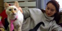 <b>Скидка до 60%.</b> 2или 3часа посещения котокафе Cat Joy