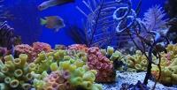 <b>Скидка до 66%.</b> Экскурсия для взрослого или ребенка вбудний либо выходной день вокеанариум «Морской аквариум наЧистых прудах»