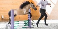 <b>Скидка до 50%.</b> Семейный или индивидуальный билет наэкскурсию поферме миниатюрных лошадей спосещением мини-зоопарка вконном комплексе «Созидатель»