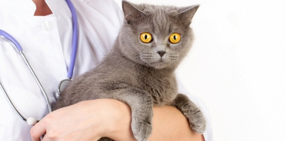 Кастрация кота, стерилизация кошки вклинике «9жизней»