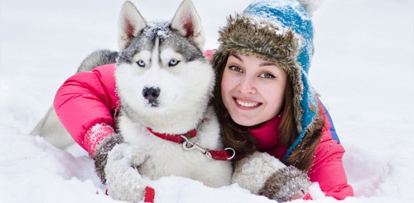 Курсы дрессировки собак отшколы Give MePaw