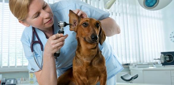 Консультация ветеринара, груминг, диспансеризация вцентре «Ирбис»