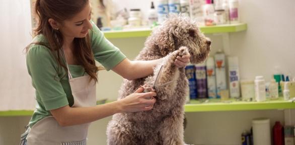 Груминг кошек или полный комплекс услуг для собак всети салонов «Милорд»