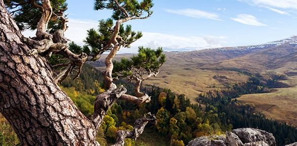 Экскурсионный тур поАдыгее виюле, августе исентябре