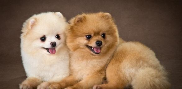 Грумингдля собак икошек взоосалоне Barber Pet