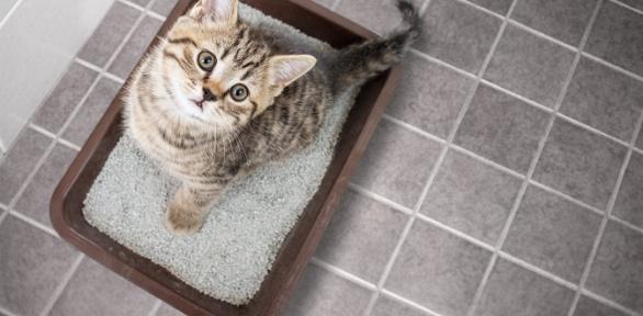 Бионаполнитель для кошачьего туалета «Mr. Подсолнух»