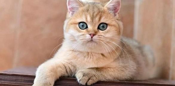 Экскурсия ифотосессия скотиками откотокафе «Котики илюди»