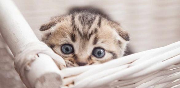 Кастрация, стерилизация кошек влечебно-диагностическом центре «Статус»