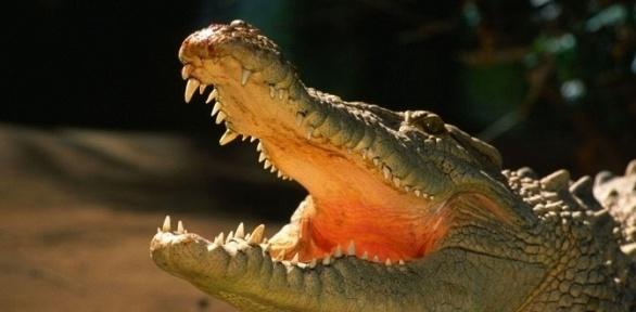 Билет навыбор напосещение океанариума вТРЦ «Мармелад»
