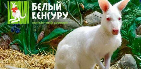 Посещение контактного зоопарка «Белый кенгуру»