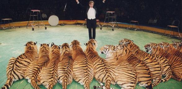 Билет напредставление «Королевские тигры Суматры» заполцены