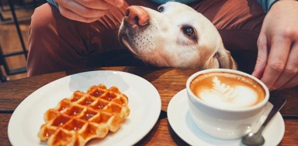 Десерты скофейным напитком вкофейне Stardogs