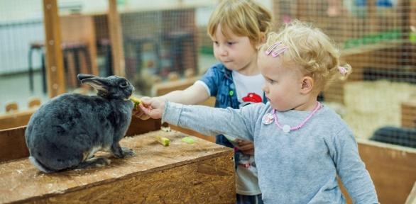 Посещение для взрослых идетей контактного зоопарка «Мир животных»
