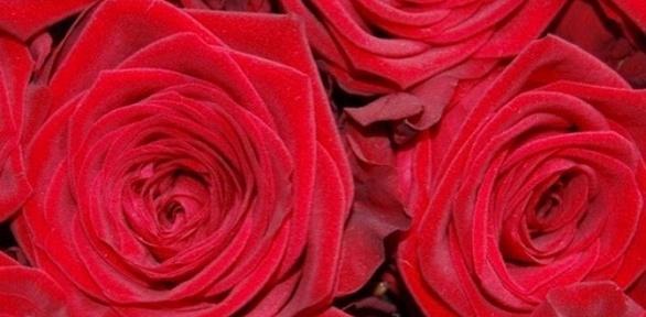 Розы высотой до70см навыбор
