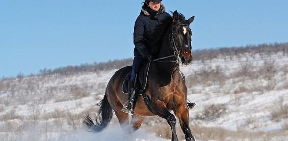 Уроки верховой езды, конная прогулка, экскурсия от«Конноспортивного клуба»