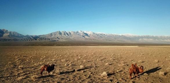 Тур вМонголию на14дней оттуроператора «Тимхайк»