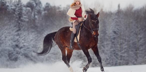 Конная прогулка, экскурсия, аренда беседки от«Федерации конного спорта»