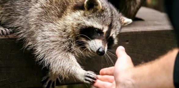 Посещение контактного зоопарка «Деревня вгороде»