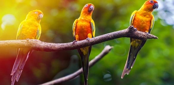 Посещение зоопарка «Мир джунглей»