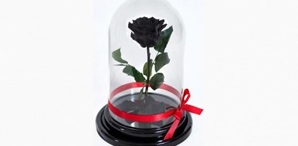 Роза вколбе любого цвета