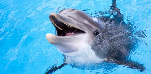 Билет нашоу-программу «Музыка моря» отЯрославского дельфинария