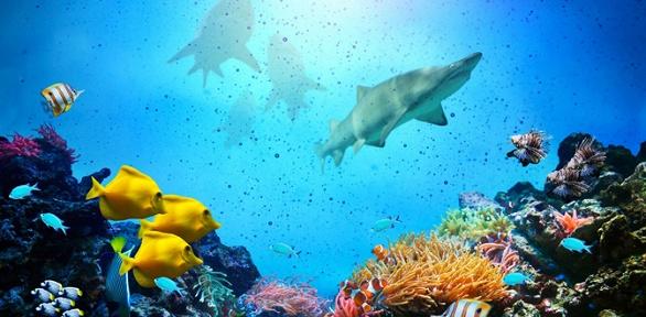 Посещение океанариума Оcean Park