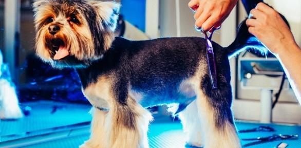 Процедуры поуходу закошками, собаками отсети груминг-салонов «ЛедиМур»
