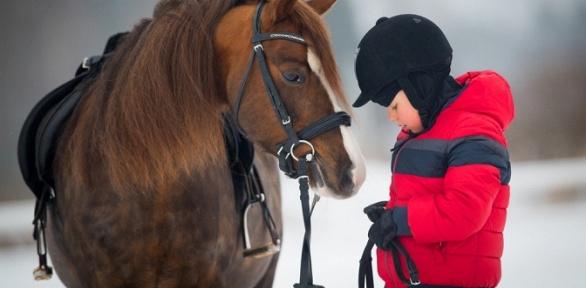 Прогулка вкарете, конная прогулка отКСК «Баллада»