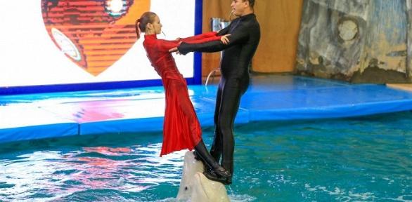 Отдых сразвлечениями вкомплексе Dolphin Planet