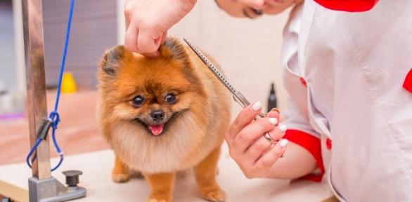 Профессиональный груминг собак икошек отстудии груминга Groomroom