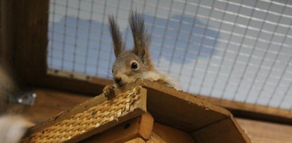 Посещение контактного зоопарка «Крошка наладошке»