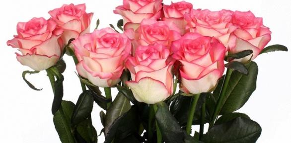 Букет изкенийских, эквадорских или голландских роз