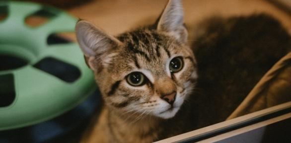 Посещение котокафе «Город кошек»