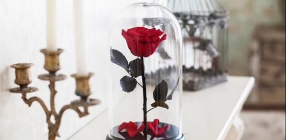 Роза вколбе соткрыткой вподарок