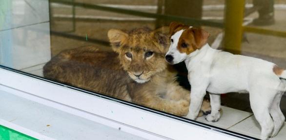 Посещение зоопарка икатание налошади вотеле «Регина»