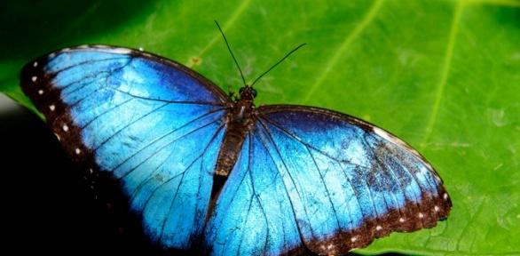 Посещение выставки экзотических бабочек, животных отпарка «Живая планета»