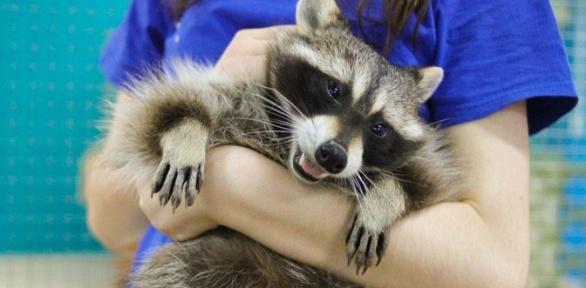 Посещение, выездные услуги отконтактного зоопарка «Трогай, гладь, корми»