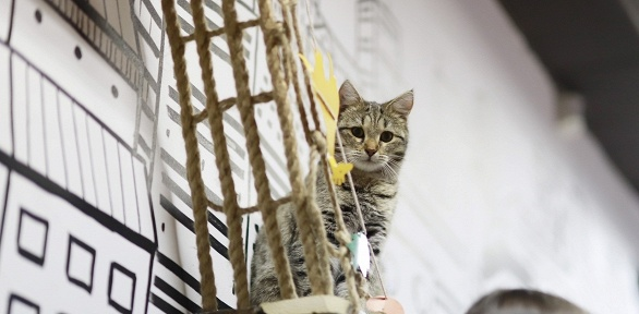 Билет напосещение выставки кошек сэкскурсией вкотокафе Loftkot