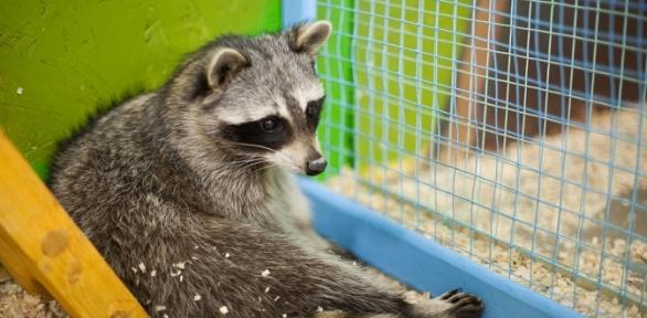 Билет напосещение контактного зоопарка «Ребятам озверятах»